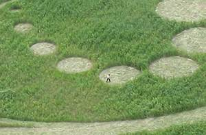 Crop circle Korea 2