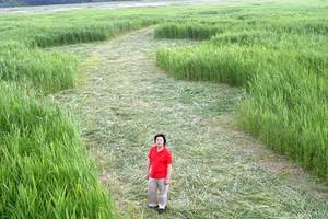 Crop circle Korea 3