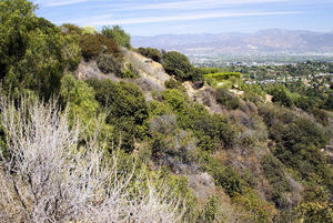 A view into the San Fernando Valley from Mulholland Drive in Laurel Canyon; in the foreground is the undergrowth where the body of Marina Habe was found.