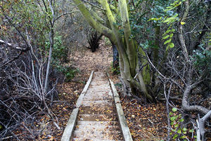 The end of the line for the stairway leading to the floor of Rustic Canyon
