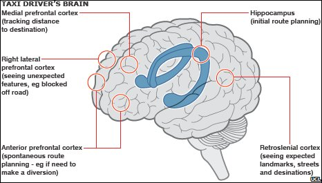 Taxi drivers 'have brain sat-nav' -- Science & Technology ...