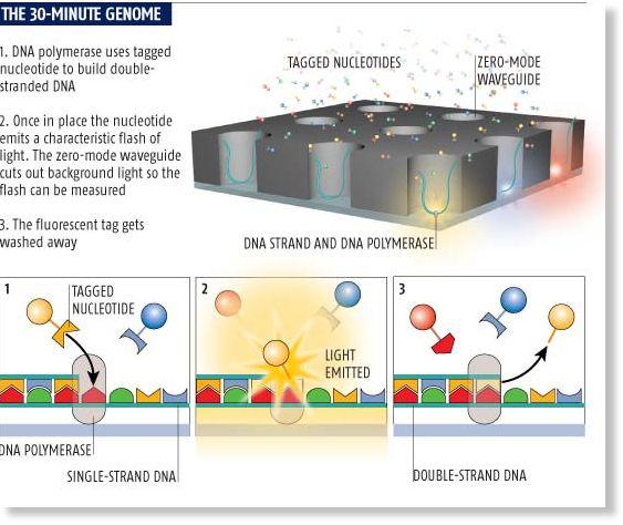 molecular fireworks could produce 39 30 minute genomes. Black Bedroom Furniture Sets. Home Design Ideas