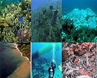coral reef degradation