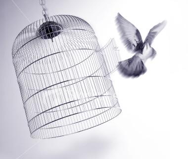 http://www.sott.net/image/image/7479/bird_cage.jpg