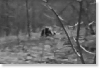 Michigan Dogman Sightings