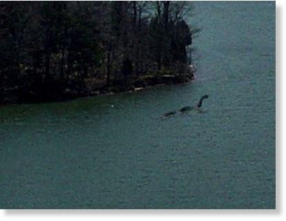 Us Monster Sighting Raystown Lake Pennsylvania 8 29