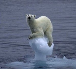 Why Are Icebergs A Natural Disaster