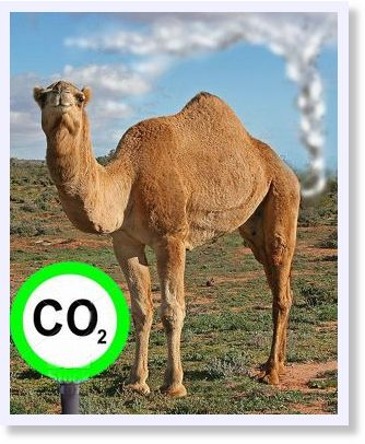 Australia - Feral camels clear in Penny Wong's carbon count ...
