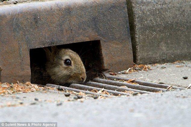 [原创] 公路围栏通道 给动物一个美好家园(18P) - 路人@行者 - 路人@行者