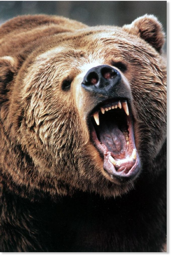 Grizzly bear attacks 66-year-old man near Slana in ...