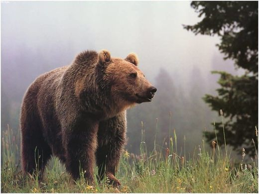 Man attacked by grizzly shot and killed animal