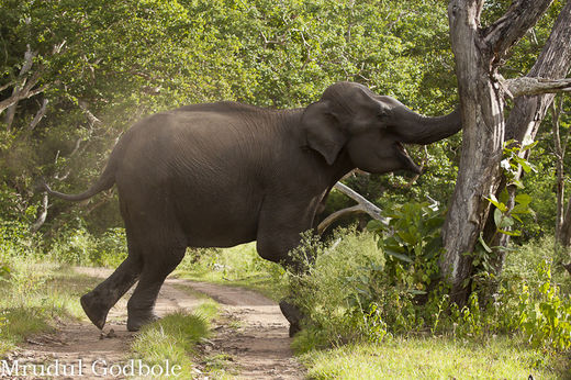 Fourth elephant attack within four weeks in Sri Lanka