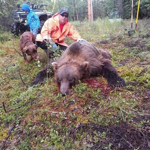 Alaska man shoots 9-foot grizzly bear that tried to enter his home