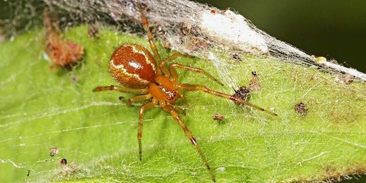 Survival of the fittest group in spiders