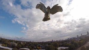 hawk downs drone