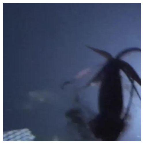 Giant Squid_2