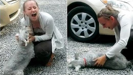 Ecstatic dog passes out from overwhelming joy when girl returns from 2 years abroad - Video