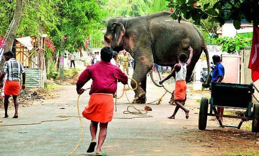 Man trampled to death by jumbo in Coimbatore, India - 7th fatality in the area in 10 months