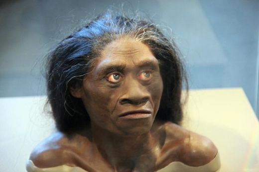 Ten years on, scientists still debating the origins of Homo floresiensis - the 'Hobbit'