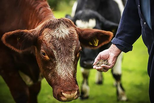 Livestock animals sicker than ever, thanks to antibiotics