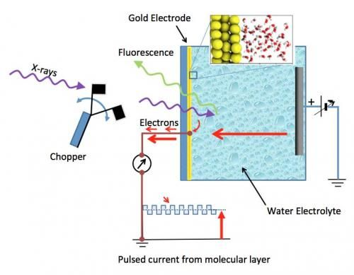 Schematic of the electrochemical cel