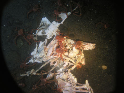 What happens to a dead body in the ocean?