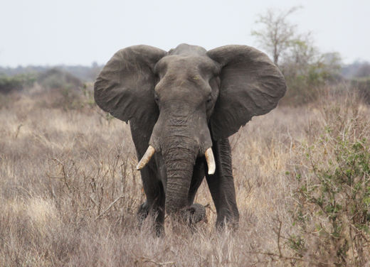 7 trampled to death by elephant herd in Malawi