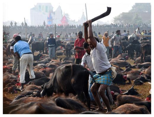 Hindu Festival_4