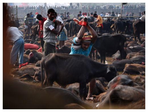 Hindu Festival_9
