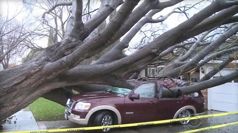 car smashed by tree