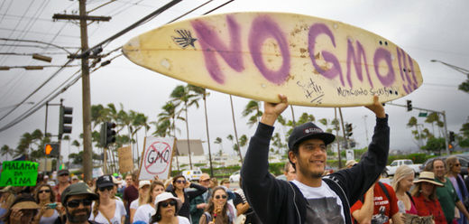 Maui stands as a beacon of hope: Moving closer to beating Monsanto over new GMO Moratorium