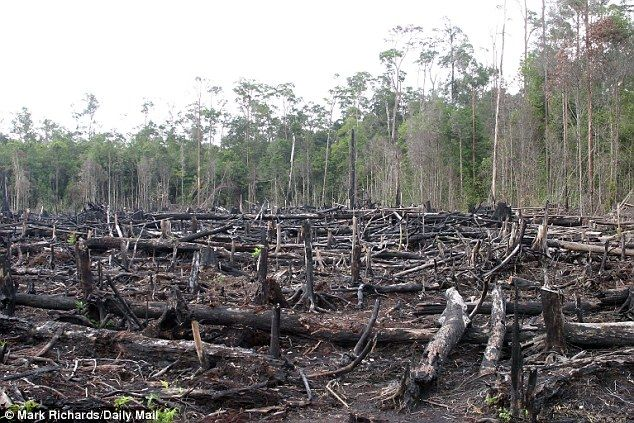 Rainforest growth speeds up with high carbon dioxide ...