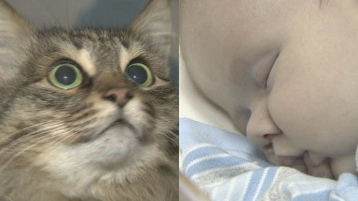 Homeless cat saves baby