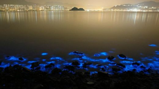 This Thursday, Jan. 22, 2015 photo made with a long exposure shows the glow from a Noctiluca scintillans algal bloom along the seashore in Hong Kong.