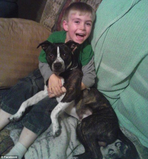 Family dogs kill 7-year-old boy in College Springs, Iowa