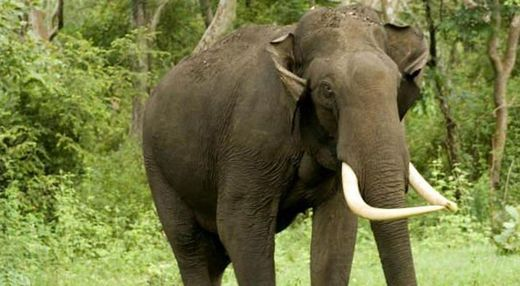Tusker kills man in Nayagram, India