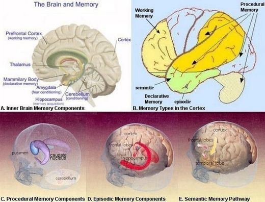 Changes in older brains due to vascular changes, rather than neuronal activity