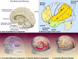 brain memory centers