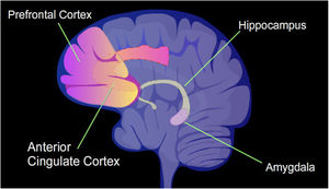 memory centers brain