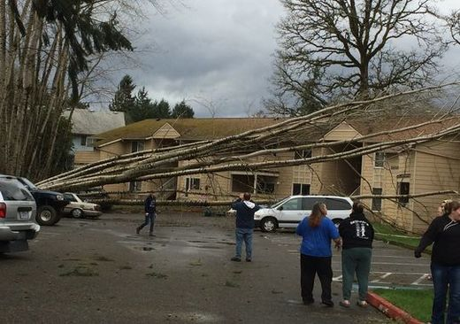 trees down St. Helens Oregon