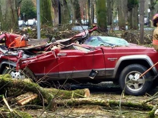 tree falls car portland oregon