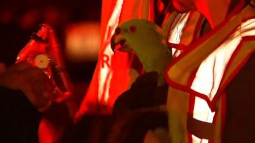 Firefighters discover parrots calling for help in burning Boise home