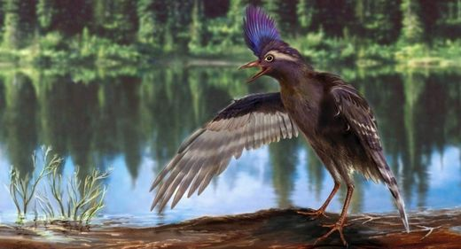 Granddaddy of all birds discovered in China