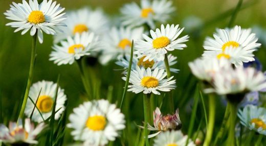 The most underrated medicinal plants