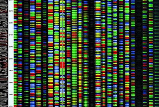 'Measuring stick' for human gene sequencing unveiled