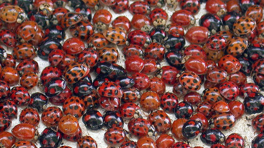 Hysteria: Students who released over 72K ladybugs in school prank face criminal charges