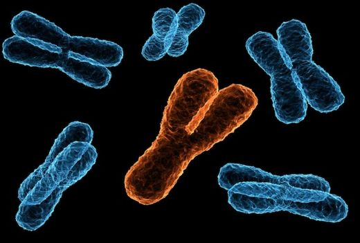 'Lost' Y chromosomes discovered on autosomes