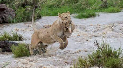 1,255 wild animals found dead after floods in Bhanvnagar, India