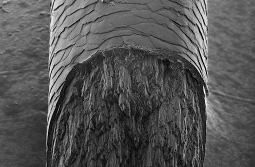 X-Ray reveals mysterious component of human hair