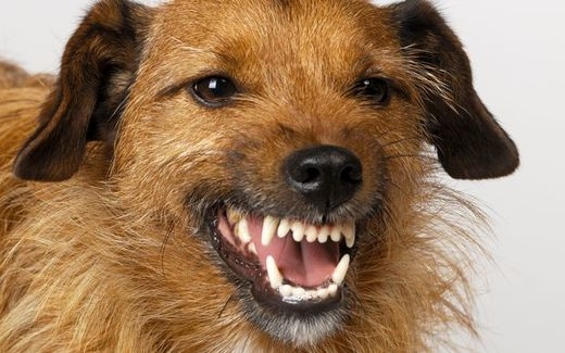 Dog attacks on the rise in New Zealand